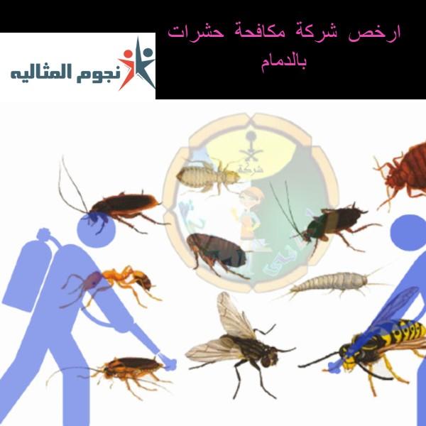 شركة مكافحة حشرات بالدمام مع خصم كبير