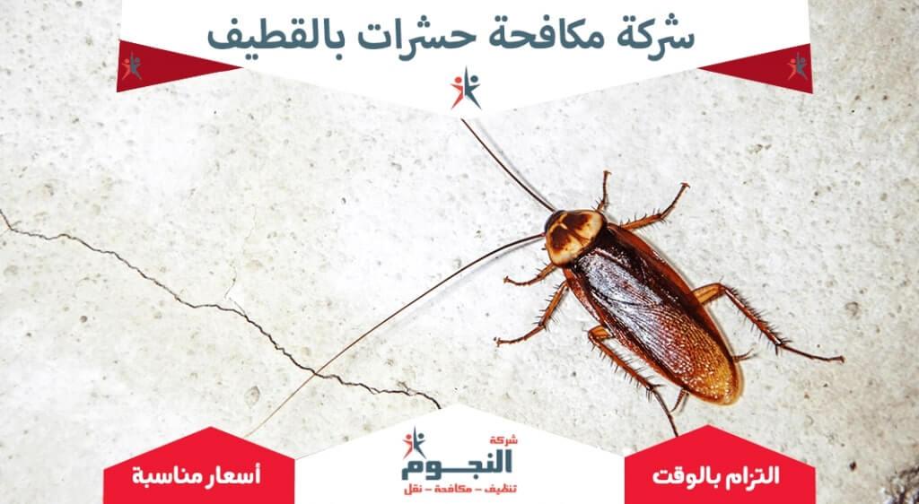 شركة مكافحة حشرات بالقطيف1