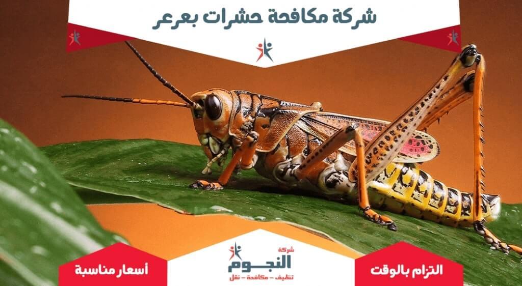 شركة مكافحة حشرات بعرعر
